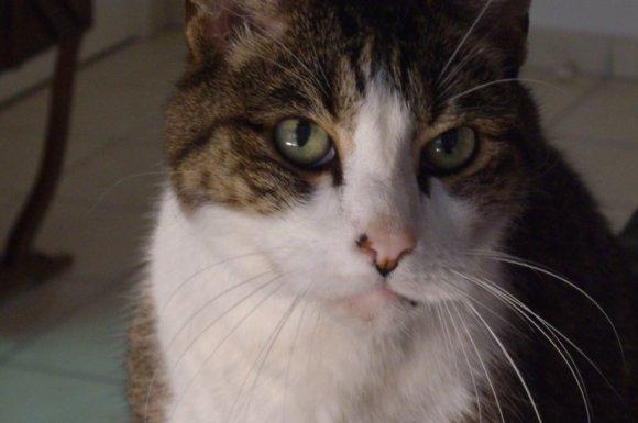 Pension de luxe pour chat Le Lavandou