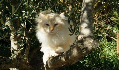 Dempsey - Elevage et pension pour chat Toulon