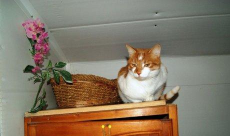 Pension de luxe pour chat La Crau