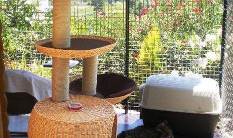 Pension chat reconnue par les mutuelles Cuers