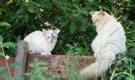 Pension pour chat courte durée Cuers