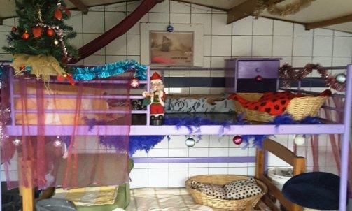 Garderie pour chat Bormes-les-Mimosas