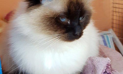 Pension pour chat La Seyne-sur-Mer