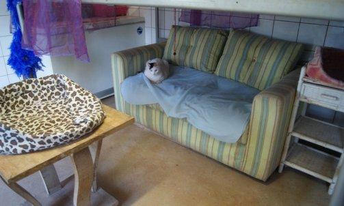 Pension pour chat courte durée La Seyne-sur-Mer