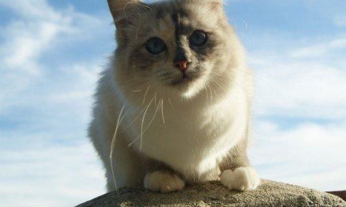 Etoile - Elevage et pension pour chat Cuers