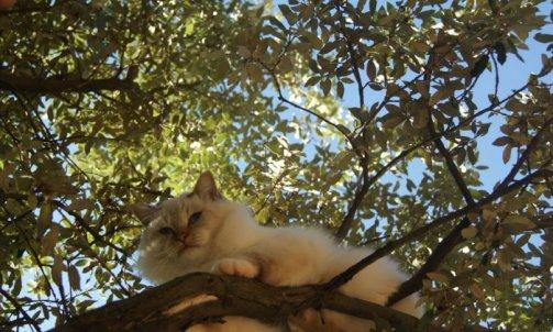 Django - Elevage et pension pour chat Cuers