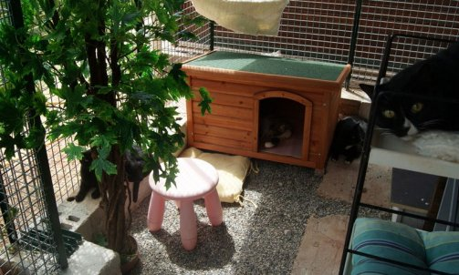 Pension pour chat Sanary-sur-Mer