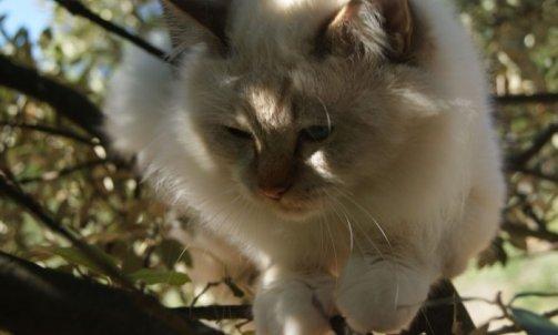Django - Elevage et pension pour chat La Seyne-sur-Mer