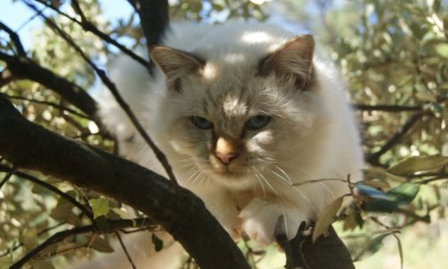 Django - Elevage et pension pour chat La Crau