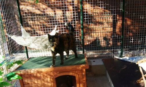 Pension pour chat Le Lavandou