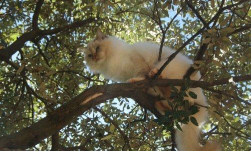 Django - Elevage et pension pour chat Le Lavandou