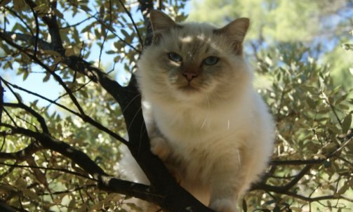 Django - Elevage et pension pour chat Ollioules