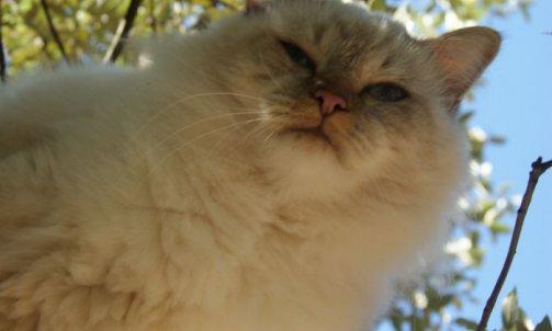 Django - Elevage et pension pour chat Bormes-les-Mimosas