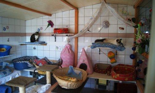 Pension pour chat longue durée Sanary-sur-Mer