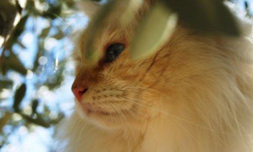 Dempsey - Elevage pour chat Sanary-sur-Mer