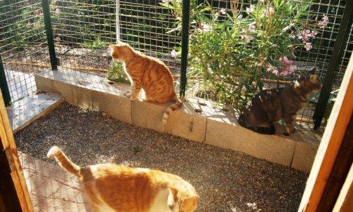 Gardiennage de chat Le Lavandou