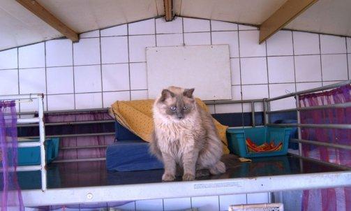 Gardiennage de chat Hyères