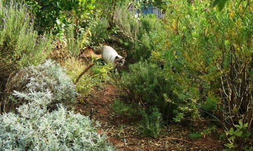 Elevage pour chat Toulon