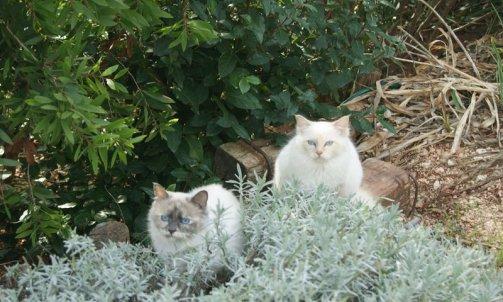 Elevage pour chat La Crau