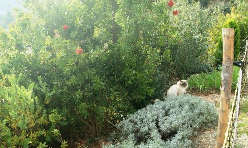 Elevage pour chat Ollioules