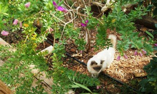 Elevage félin Bormes-les-Mimosas