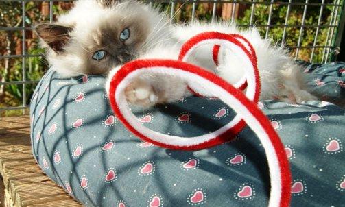 Pension pour chat longue durée La Crau