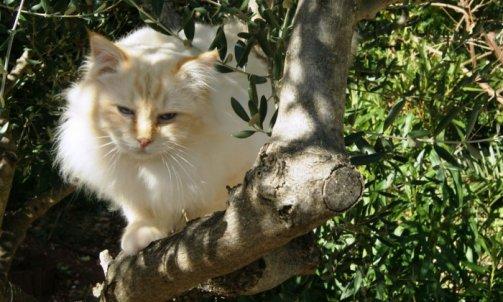 Dempsey - Elevage et pension pour chat Sanary-sur-Mer