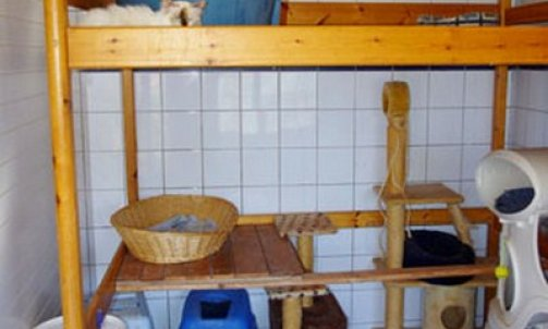 Elevage pour chat Sanary-sur-Mer