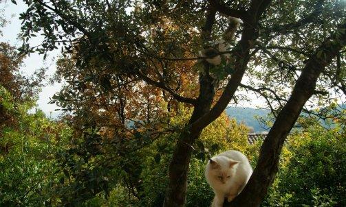 Garderie pour chat Sanary-sur-Mer