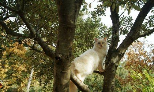 Garderie pour chat La Seyne-sur-Mer