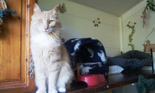 Pension pour chat longue durée Le Lavandou