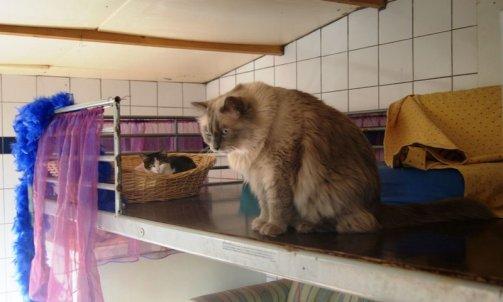 Pension pour chat courte durée Ollioules