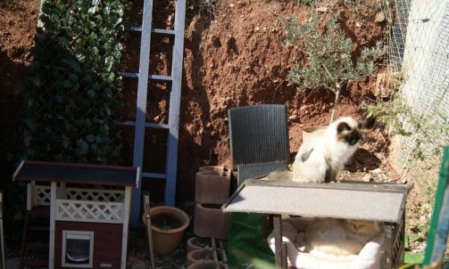 Elevage pour chat Carqueiranne
