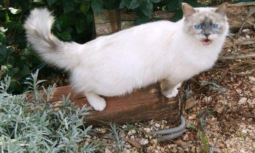 Elevage pour chat La Seyne-sur-Mer