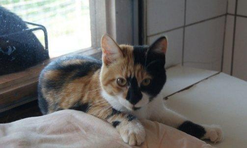 Pension pour chat courte durée Bormes-les-Mimosas