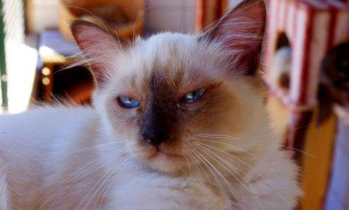 Elevage pour chat Hyères