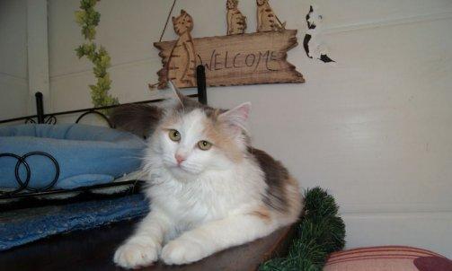 Pension pour chat longue durée Carqueiranne