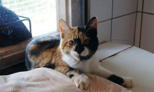 Pension pour chat courte durée Carqueiranne