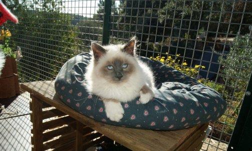 Pension pour chat longue durée Toulon