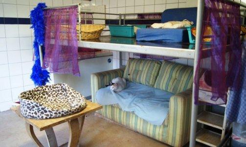 Pension pour chat courte durée Hyères