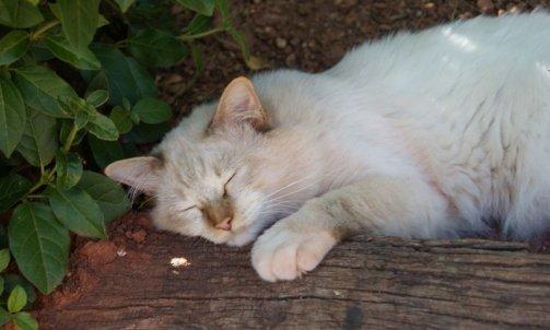 Elevage pour chat Le Lavandou