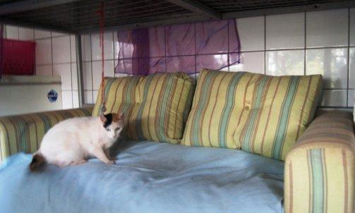 Pension pour chat courte durée Sanary-sur-Mer