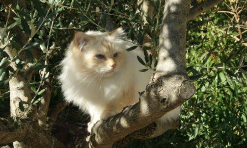 Dempsey - Elevage et pension pour chat Ollioules