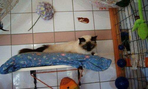 Pension pour chat longue durée Hyères