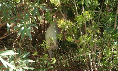 Elevage pour chat Bormes-les-Mimosas